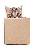 Brown kitten in a box.