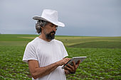 Farmer with tablet examining sunflower plants in the middle of an agricultural field. Walking and checking out the crop. Agricultural Occupation.