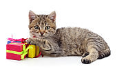 Gray kitten with a gift.