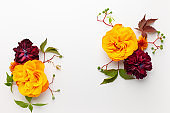 Autumn composition with flowers, leaves and berries on white background