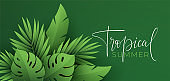 Hello Summer banner. Paper-cut green tropical leaves of palm, monstera. Summer background with tropical plant leaf. Vector illustration