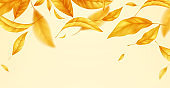 Falling flying autumn leaves background. Realistic autumn yellow leaf isolated on yellow background. Fall sale background. Vector illustration
