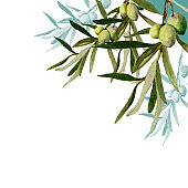 Watercolor olive branches on white background greeting card.