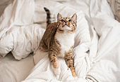 Playful white red kitten jumps on a white blanket.
