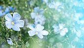 little blue cute flowers. horizontal summer background