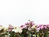 Small chrysanthemum flowers over white background
