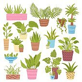 Green plant collection, floral indoor nature pot set, vector illustration. Garden decoration, house plant with leaf, isolated on white.