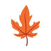 Autumn Leaf. Hello Autumn. Autumn leaves, isolated. Vector illustration