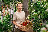 Happy young female worker of vertical farm holding wooden box with fresh ripe strawberries