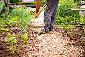 Mature Man Working in the Vegetable Garden on Sunny Spring Day