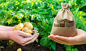 Money bag and potatoes in the hands of a farmer. Calculation of profits and results of the harvest. Investment in farming, startups. The development of agriculture industry. Crop, crops