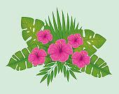 fucsia tropical flowers
