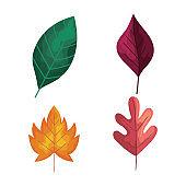 bundle of four autumn leafs plants foliage icons