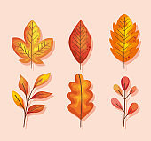 six autumn leafs