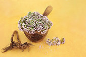 Valerian Herb Root and Flowers