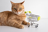 Ginger cat with shopping cart on white background looking seriously. Cute pet deciding to go buy groceries in animal store. Small miniature shop trolley. Copyspace banner
