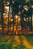 Vertical photo in park of trees during sunset light