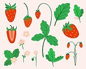 Strawberry set. Hand drawn fresh forest or garden berry collection. Whole juicy berries, bush with green leaves and flowers doodle summer element. Vector cartoon minimalistic isolated illustration