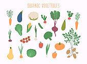 Vegetable set in vector. Garden banner. Organic and healthy food.