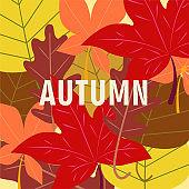 Hello Autumn. Fall season vector background.