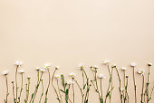 Eco friendly summer concept on beige background with white eco chamomile flowers