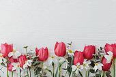 Beautiful red tulips,daffodils, eucalyptus flowers on rustic white wood flat lay. Greeting card
