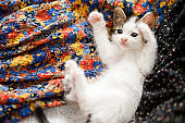 Cute little kitten playing on colorful floral dress on bed, top view.Adorable playful kitty relaxing