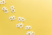 Summertime concept on yellow background with flower heads of daffodil