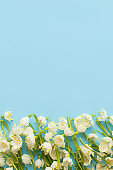 Spring flowers border on blue paper flat lay. Floral greeting card, space for text. Hello spring