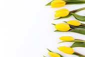 Flat lay with yellow tulip flowers on white background. Greeting card concept