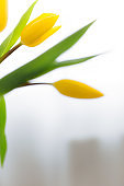 Bouquet of yellow tulip flowers in vase. Greeting card concept