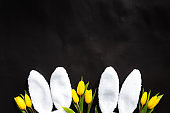 Easter concept. White fluffy rabbit ears, yellow tulips on a black background