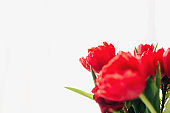 Bouquet of red tulip flowers on white background. Greeting card concept