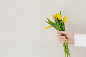 Hand holding bouquet with yellow tulip flowers on gray concrete background