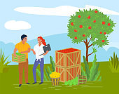 Picking Apples in Container, Local Fruit Vector
