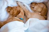 Puppies sleeping on white sheet