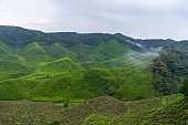 Green tea plantations in the hills in the highlands. The best tea grows in humid, foggy climates high in the mountains