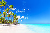 Coconut Palm tree on white sandy beach in Punta Cana, Dominican Republic.