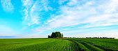 Springtime panoramic landscape with lonely growing birch trees and rural fields after sunset.