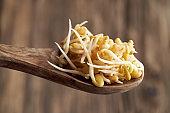Fresh fenugreek sprouts on a wooden spoon