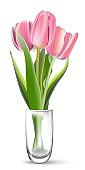 Bunch of pink tulips in glass on white background. Realistic spring colorful flowers vector illustration. Floral decorative plants with petals and green leaves in blossom