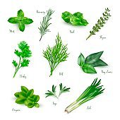 Green herbs set isolated on white background. Thyme, rosemary, mint, oregano, basil, sage, parsley, dill, bay leaves, leek spices vector illustration. Herbal seasoning ingredients for cooking