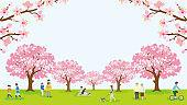People enjoying cherry blossom viewing