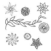 spring flowers and leafs hand drawn set icons vector illustration design