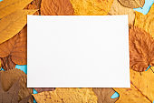 Composition with yellow and brown autumn leaves and white paper mockup on blue pastel background. Blank, flat lay, top view, still life, copy space.