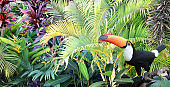 Beautiful colorful toucan bird on a branch in a rainforest