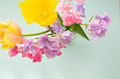 Purple and pink sweet pea and yellow tulips in a vase Spring flowers