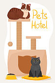 Pet hotel concept. cute cat on the bed and gray cat near the cat's house. Food, entertainment for the living on your vacation.