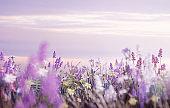 Wild Flowers In A Meadow Blowing In The Wind