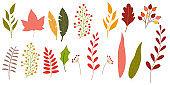Autumn leaf icon set. Colorful foliage. Fall leaves. Vector illustration.